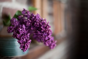 Lilacs overflowing from a vase